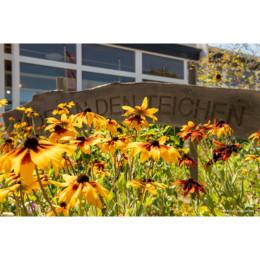 Blumen mit Eingangsschild